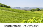 sunny winegrowing scenery in... | Shutterstock . vector #750998554