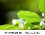 natural green plants background ... | Shutterstock . vector #751023763