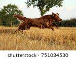 flat coated retriever is...   Shutterstock . vector #751034530
