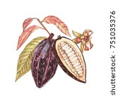 set of botanical illustration.... | Shutterstock . vector #751035376