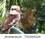 Australian Native Bird The...