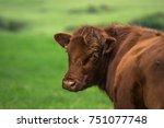 brown cow | Shutterstock . vector #751077748