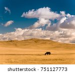 Panorama of beautiful autumn field. Majestic open space under blue sky with clouds. Kazakh steppe. Horse on pasture.