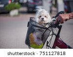 small  white and fluffy dog... | Shutterstock . vector #751127818
