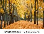 Autumn Season  Yellow Trees In...
