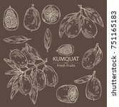 collection of kumquat  whole... | Shutterstock .eps vector #751165183