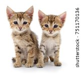 Stock photo two small kittens isolated on white background 751170136