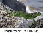Bright Green Iguana Lizard...