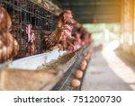egg chicken farming background. ... | Shutterstock . vector #751200730