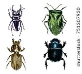 colour insect stipple drawing... | Shutterstock .eps vector #751307920