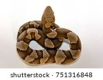 Small photo of Broad-Band Copperhead snake (Agkistrodon contortrix laticinctus) on white background coiled and ready to strike