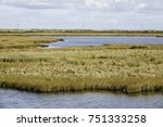 expanse of marshland and... | Shutterstock . vector #751333258