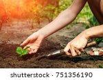 women's hands put a sprout in... | Shutterstock . vector #751356190
