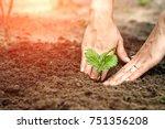 women's hands put a sprout in... | Shutterstock . vector #751356208