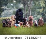 many different breeds of dogs... | Shutterstock . vector #751382344