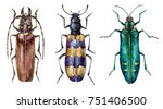 watercolor set of beetles... | Shutterstock . vector #751406500