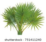young betel palm on isolate... | Shutterstock . vector #751411240