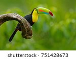 Stock photo keel billed toucan ramphastos sulfuratus bird with big bill toucan sitting on the branch in the 751428673