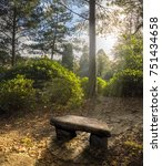 Stone Bench In The Wood At...