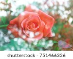 beautiful blooming rose with... | Shutterstock . vector #751466326