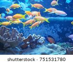 a school of fish near the coral ... | Shutterstock . vector #751531780