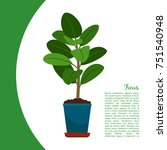 ficus indoor plant in pot... | Shutterstock .eps vector #751540948