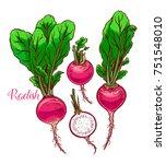 cute set of ripe radish. hand...   Shutterstock .eps vector #751548010