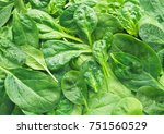 fresh green baby spinach leaves ... | Shutterstock . vector #751560529