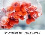 Winter Snow Berries. Winter...