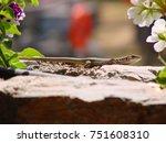 closeup photo of lizard         ... | Shutterstock . vector #751608310