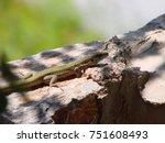 closeup photo of lizard         ... | Shutterstock . vector #751608493
