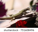 closeup photo of lizard         ... | Shutterstock . vector #751608496