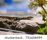 closeup photo of lizard         ... | Shutterstock . vector #751608499