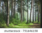 Beautiful Summer Forest With...