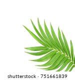 green leaf of palm tree... | Shutterstock . vector #751661839