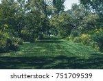 garden background with shrubs... | Shutterstock . vector #751709539