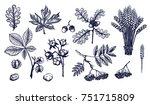 autumn leaves hand drawn... | Shutterstock .eps vector #751715809