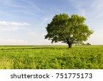 beautiful oak tree with green... | Shutterstock . vector #751775173