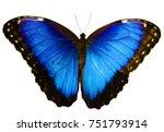 blue morpho butterfly  morpho... | Shutterstock . vector #751793914