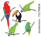 vivid tropical birds set. green ... | Shutterstock .eps vector #751798858