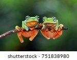 Tree Frog  Flying Tree Frog On...