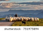 Flock Of Sheep With Shepherd...