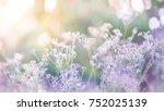 Beautiful Pastel Floral Field....