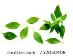 basil leaf isolated on white... | Shutterstock . vector #752050408