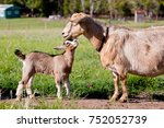 beige brown baby kid goat with... | Shutterstock . vector #752052739