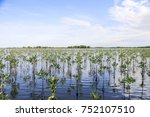 tropical mangrove forest at... | Shutterstock . vector #752107510