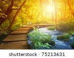 boardwalk in the forest ...   Shutterstock . vector #75213631