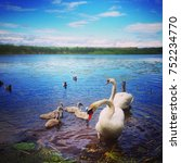 beauty of swan | Shutterstock . vector #752234770