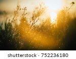 summer flowers. sunset  sun | Shutterstock . vector #752236180