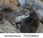 a pair of otters nuzzling... | Shutterstock . vector #752258863
